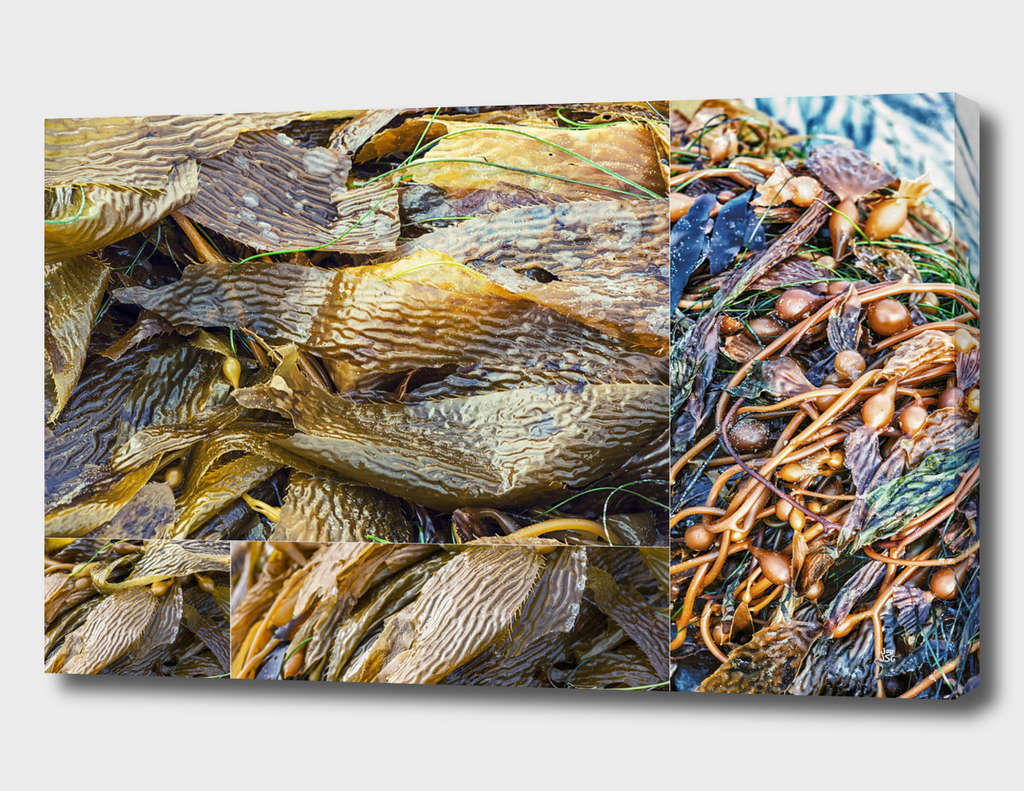 Kelp Collage