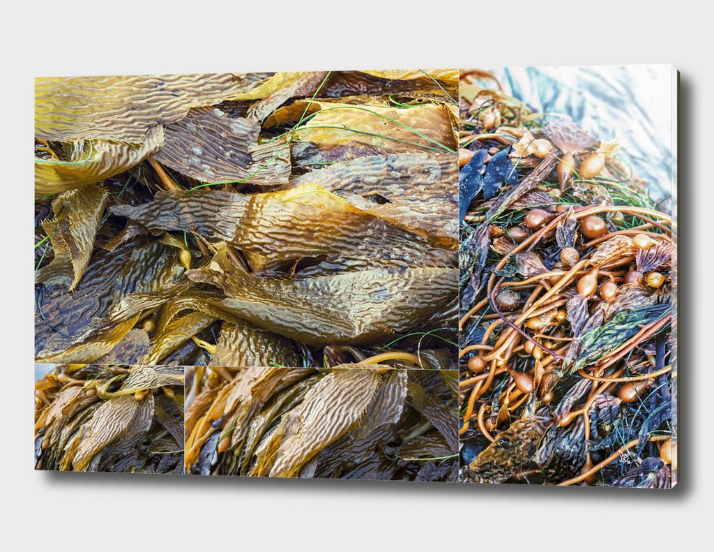 Kelp Collage