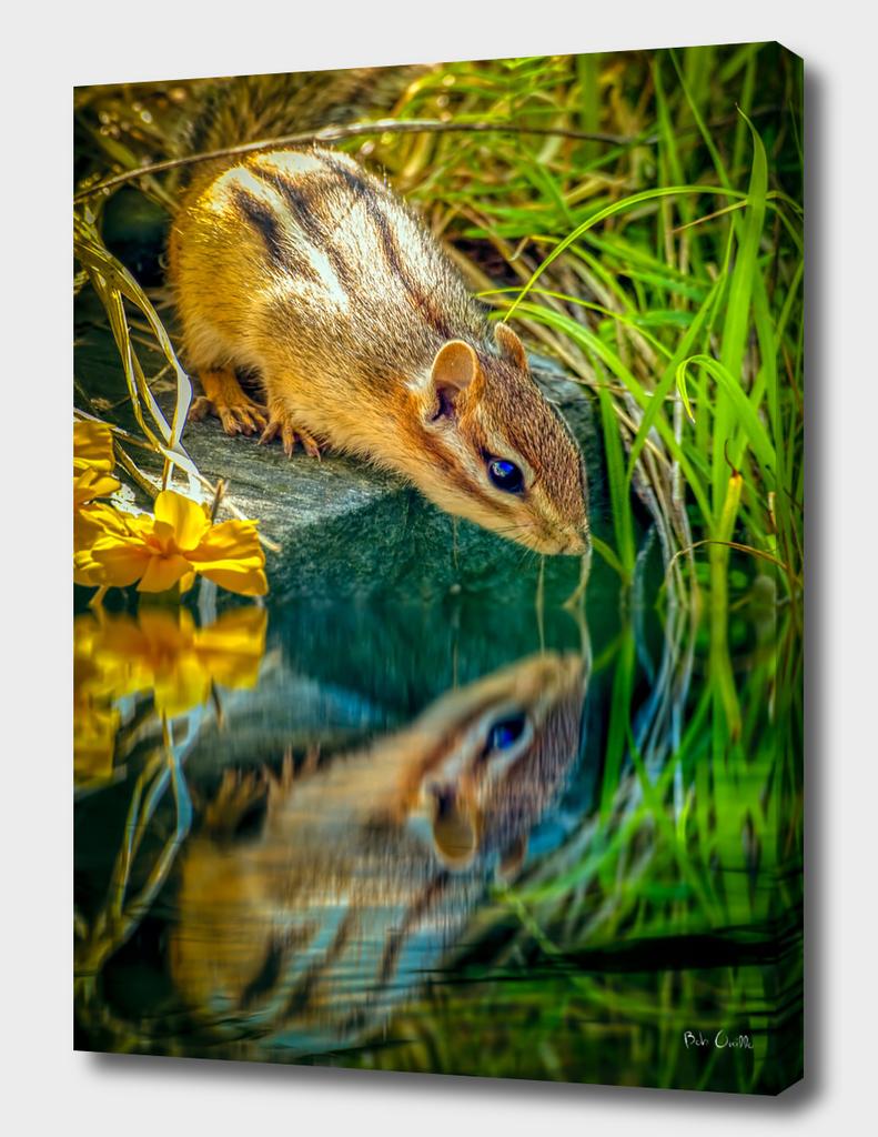 Chipmunk Reflection