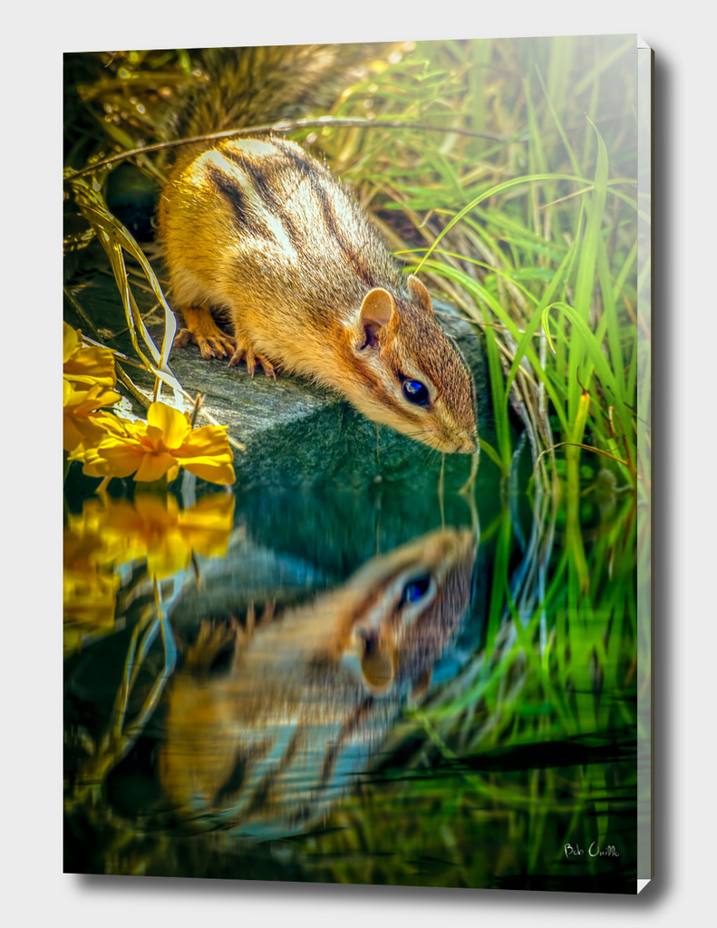 Chipmunk Reflection