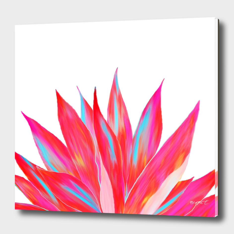 Sunny Agave Fringe Illustration
