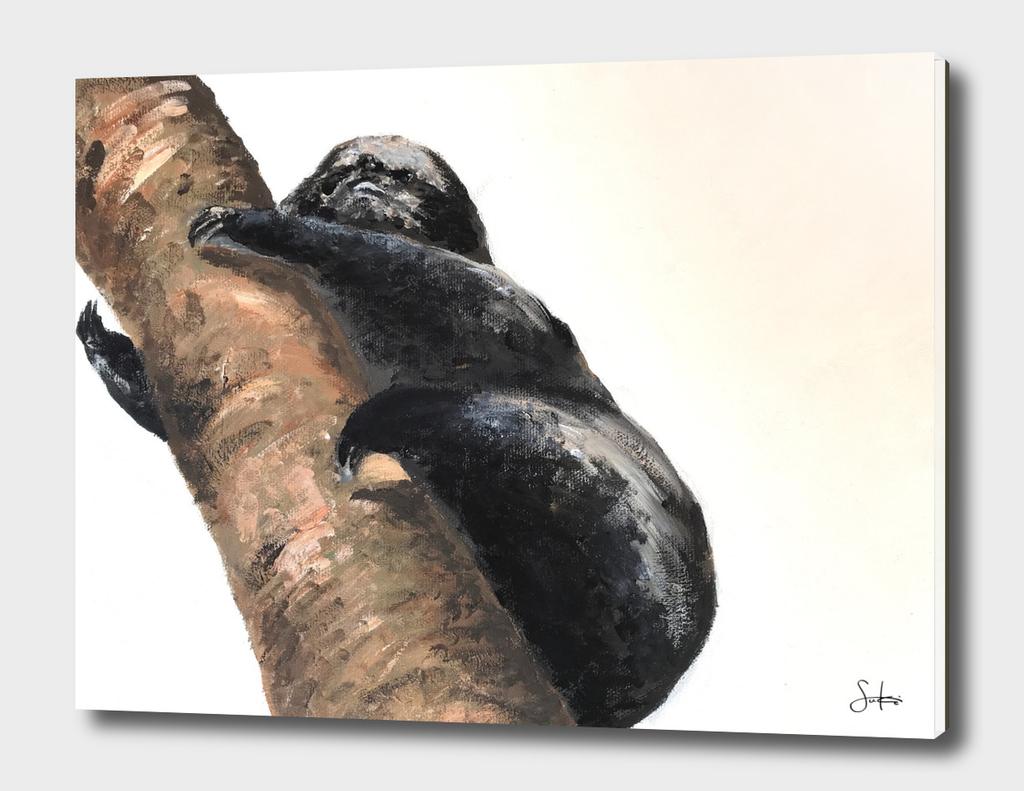 Sloth(Pereza) 2015