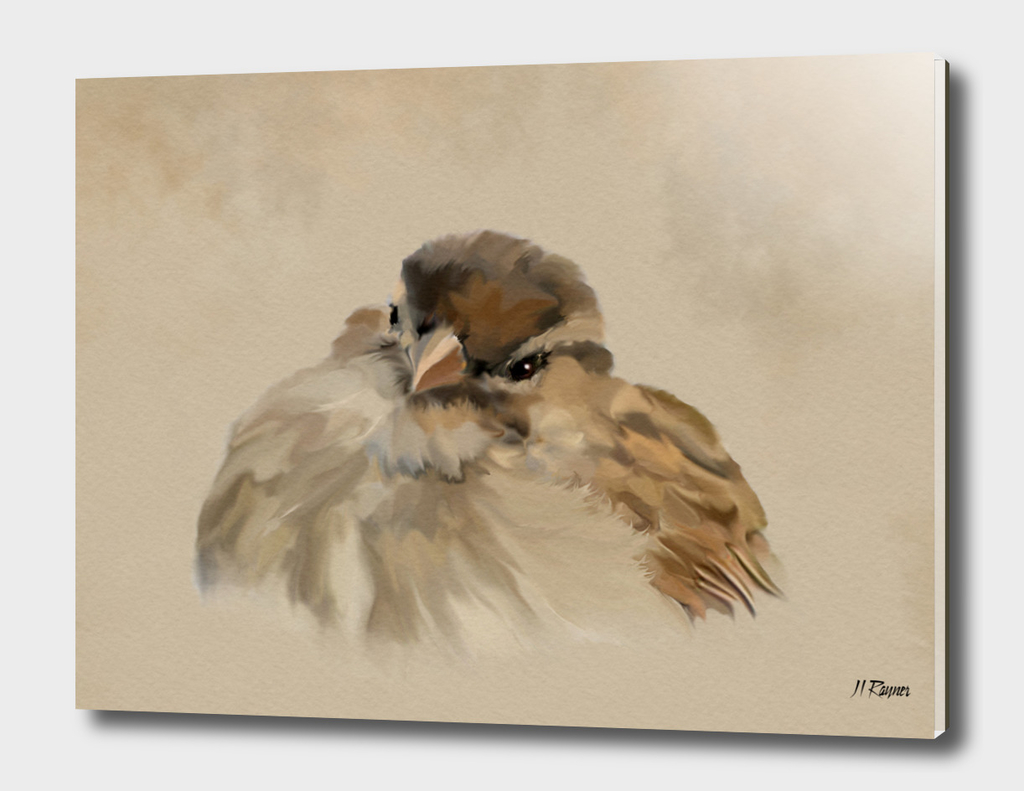 Bird: House Sparrow