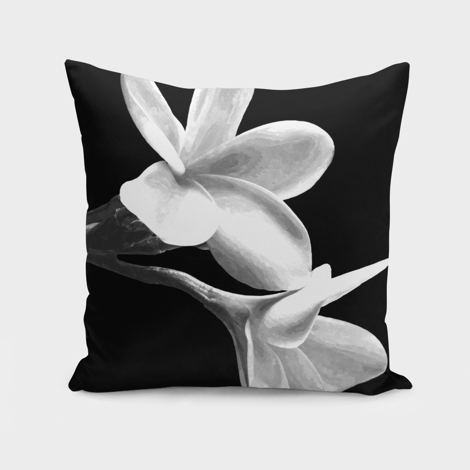 White Flowers Black Background