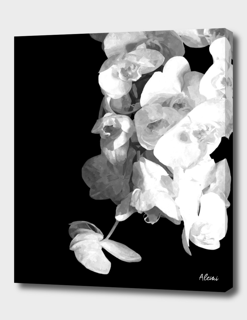 White Orchids Black Background