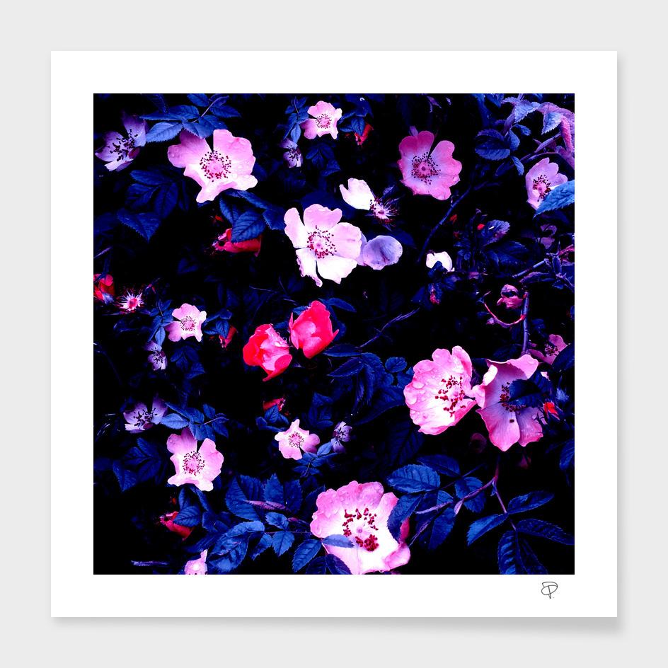 Bold Blue And Pastel Pink Blush Rose Floral