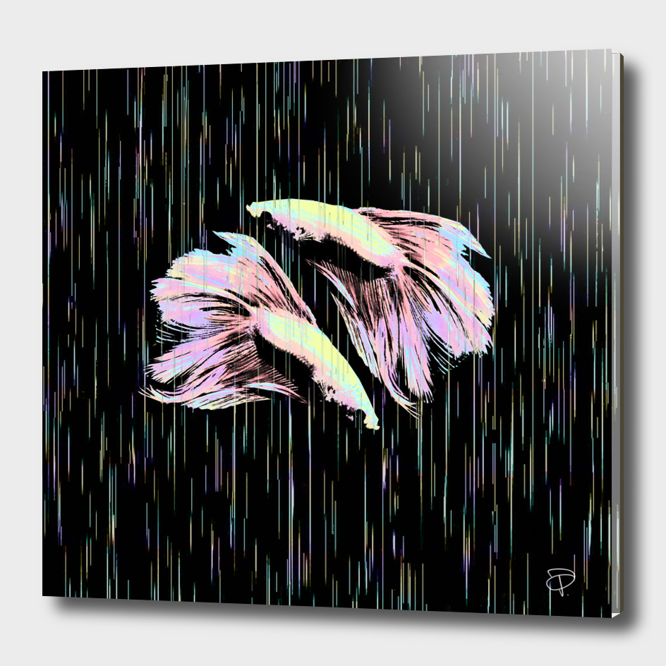 Siamese Fighting Fish in Electro Synchronicity