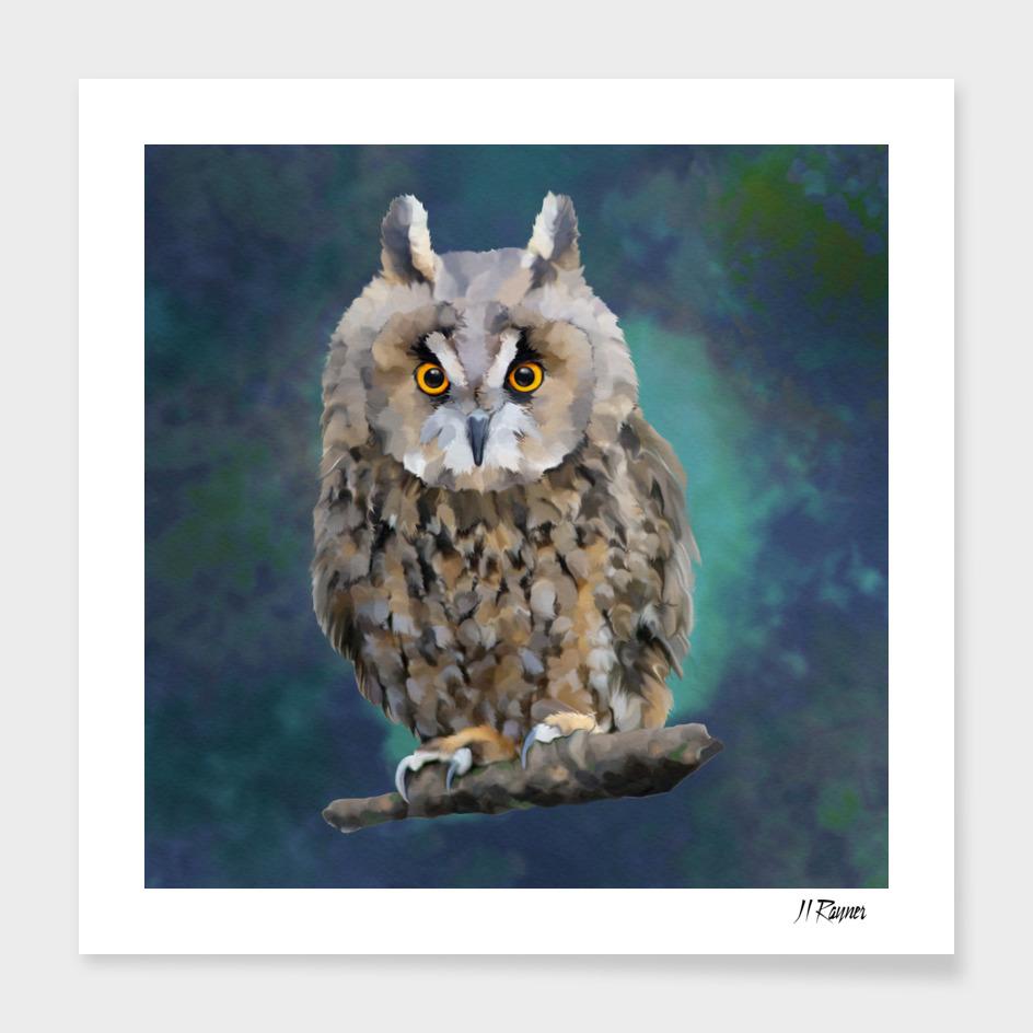 Bird: Young Long Eared Owl