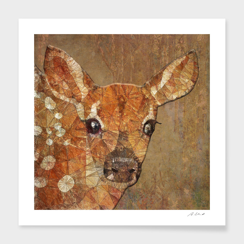 fawn in the wood