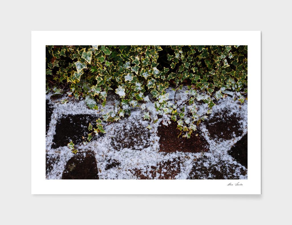 Neve em Londres - 1