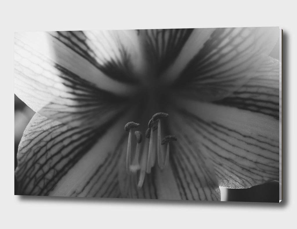 Botanical Gardens - Black Orchid #718