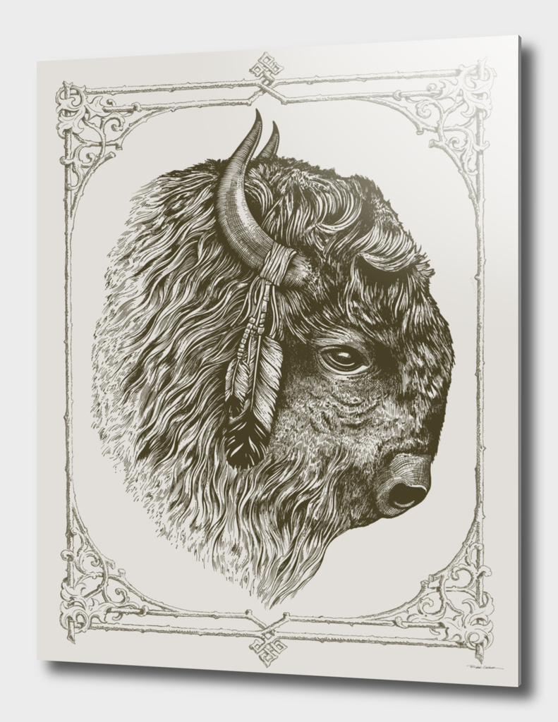 Buffalo Portrait (Bison)