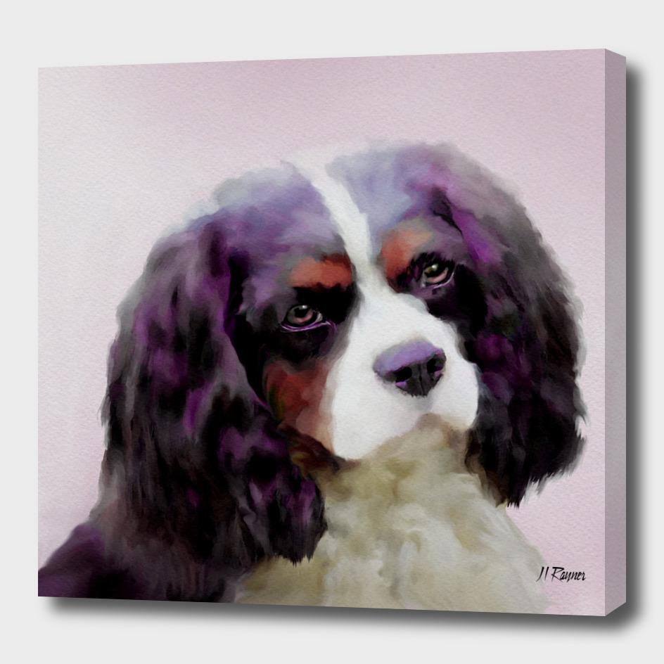Dog: Cavalier King Charles Spaniel