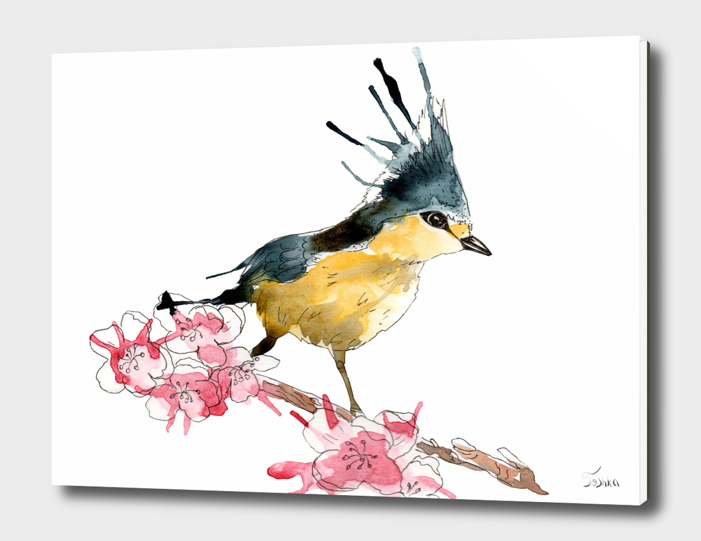 bird of stains