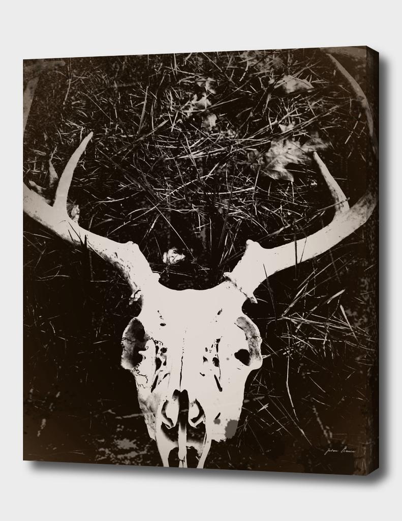 Deer Skull III