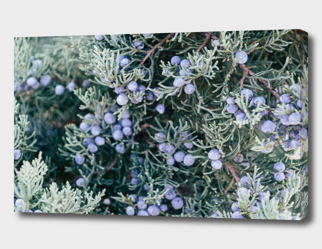 Botanical Gardens Evergreen #335