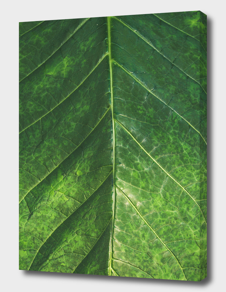Botanical Gardens Leaf #101