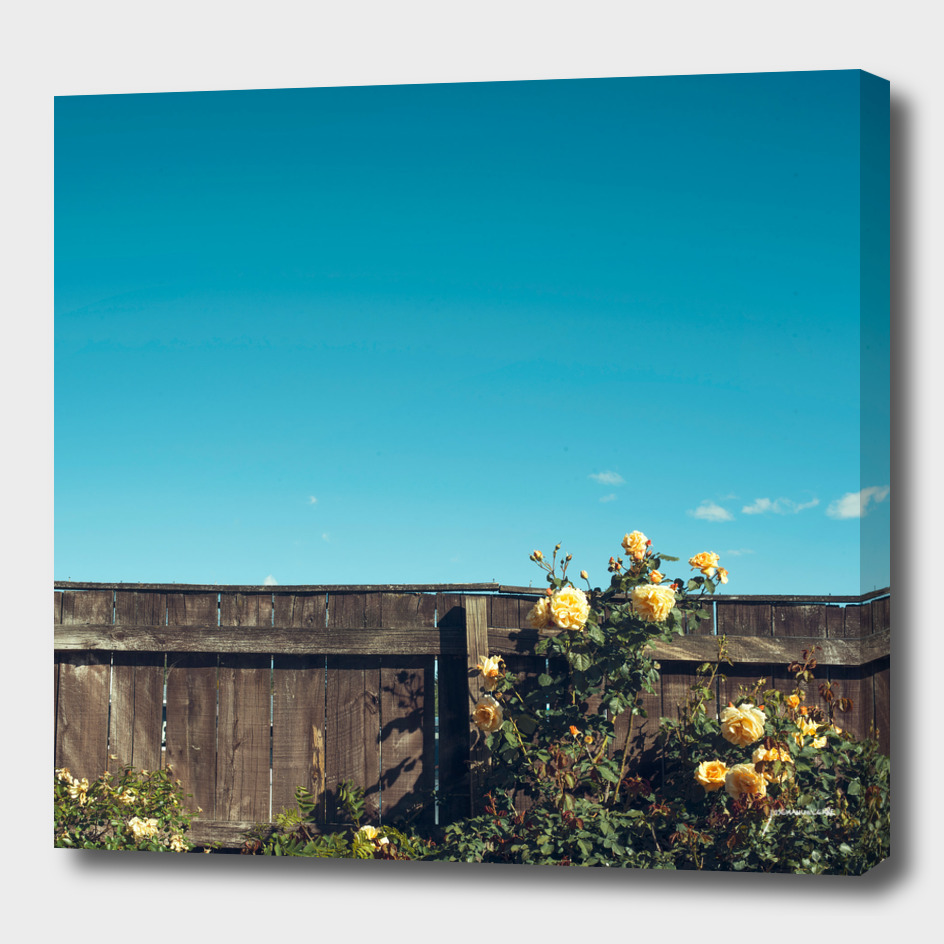 Yellow flowers over a wooden fence
