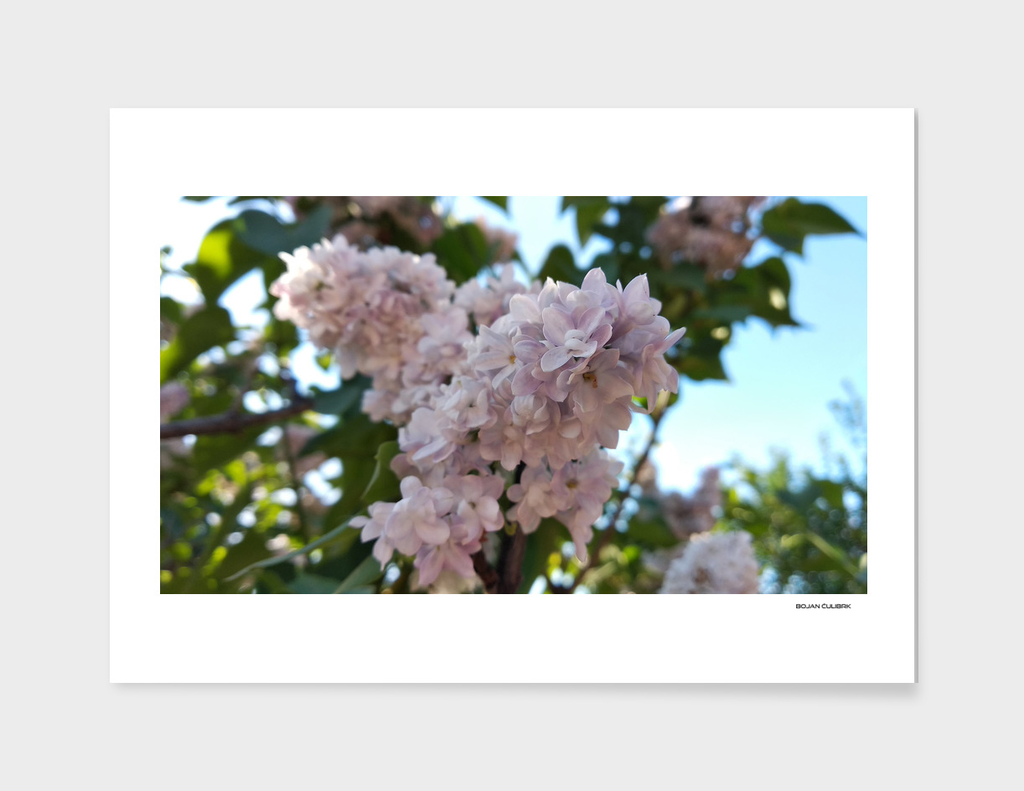 Flowers (20)