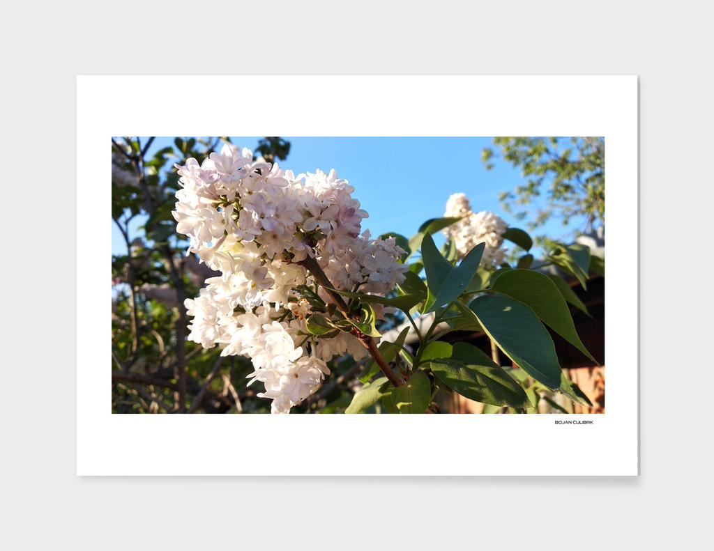 Flowers (22)