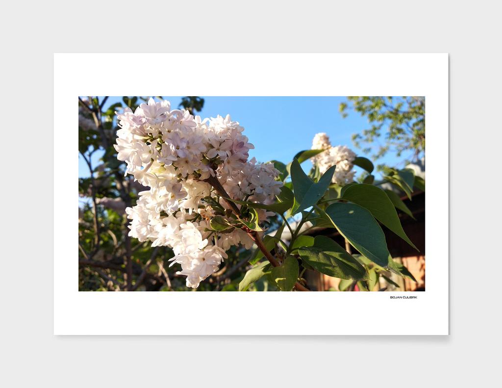 Flowers (23)