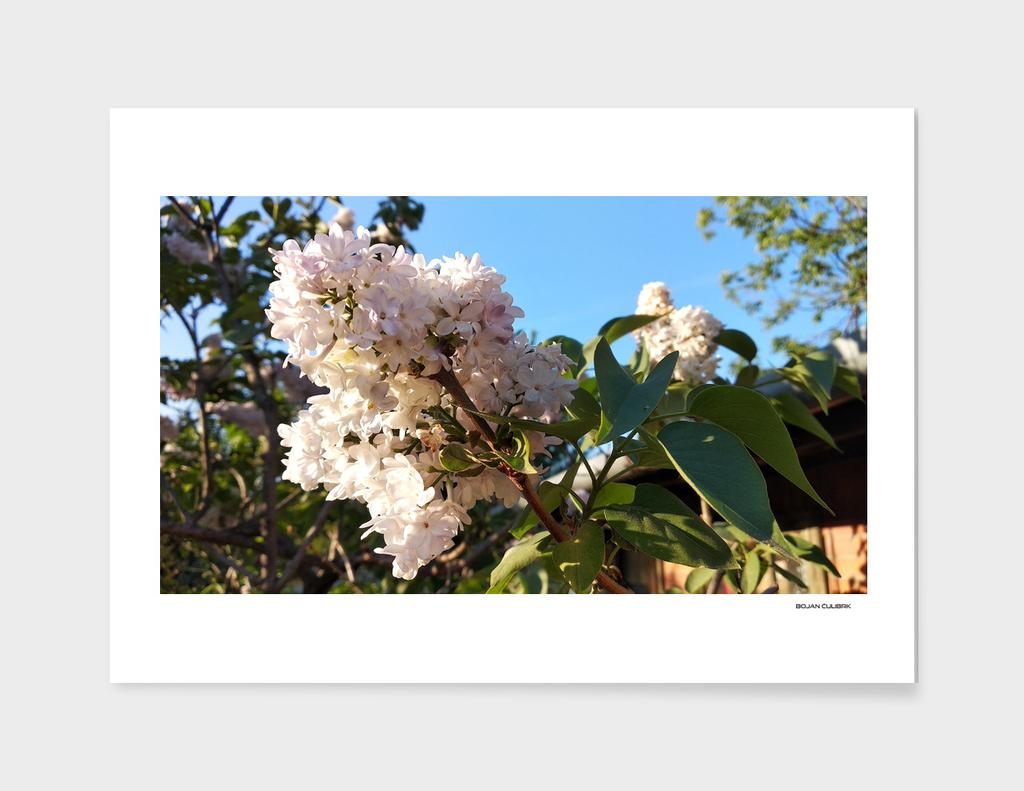 Flowers (24)