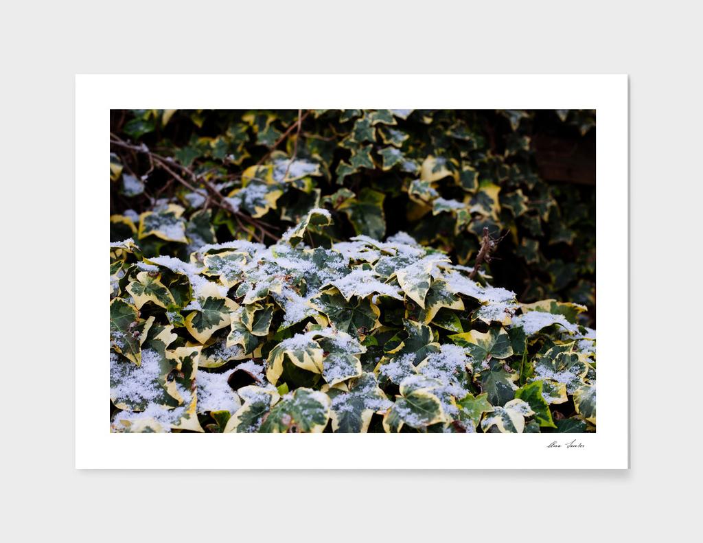 Neve em Londres - 4