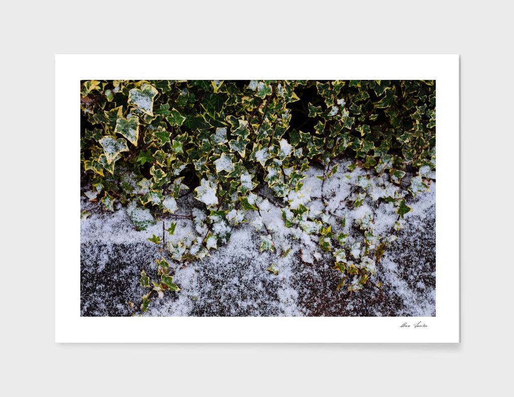 Neve em Londres - 6
