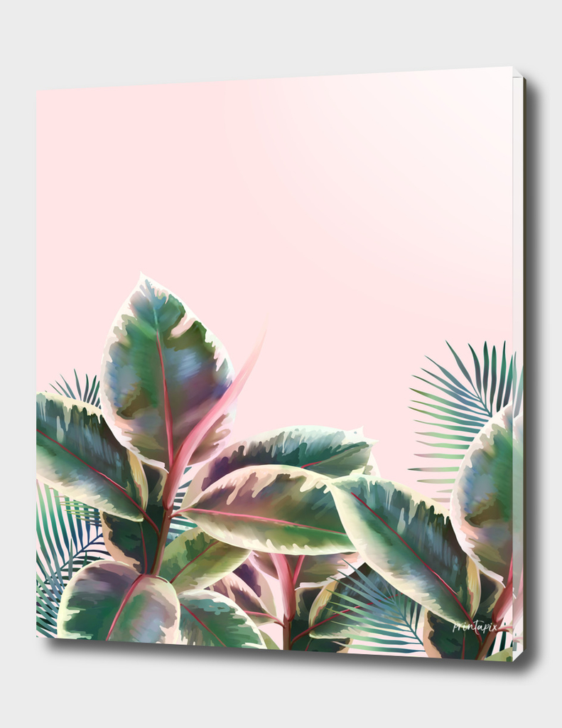 plant leaves on pink