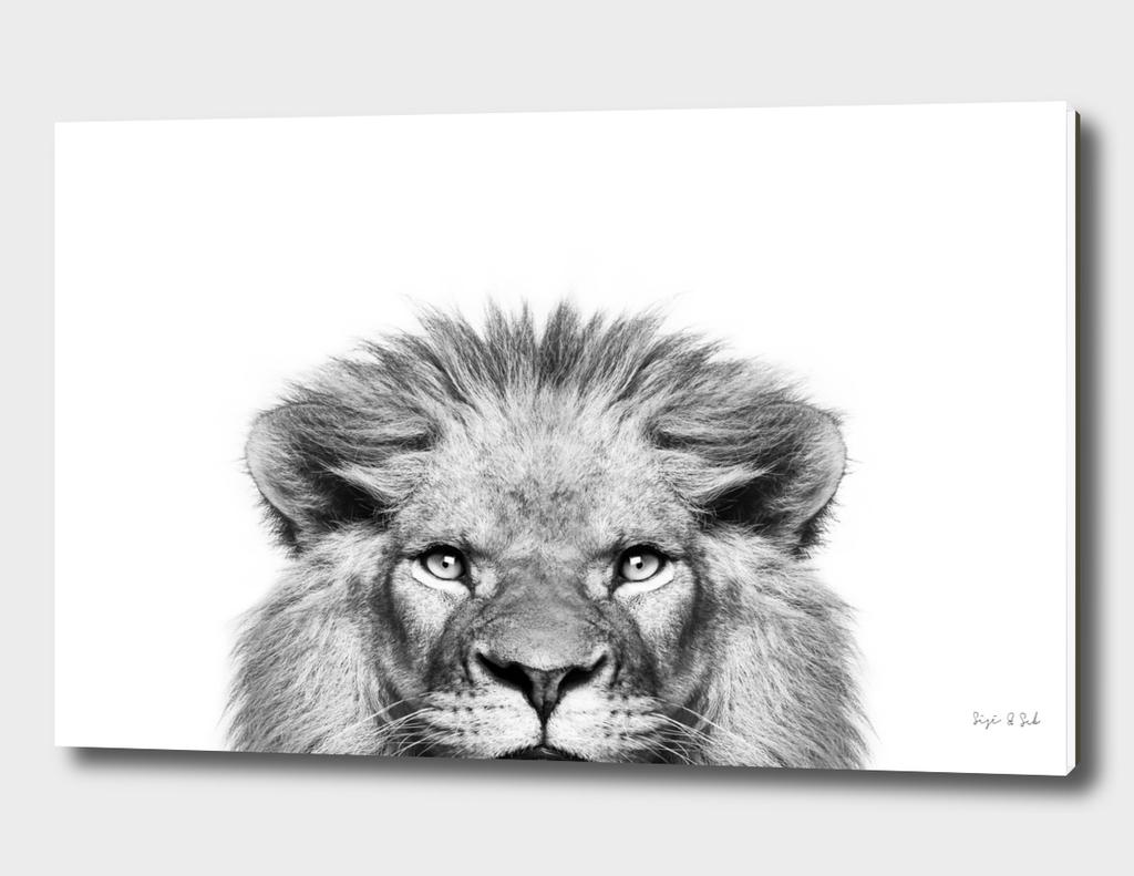 Peeking Lion