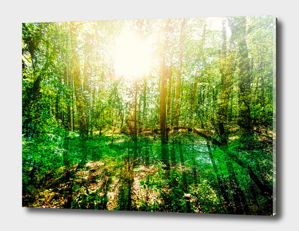 Impressions: Forest