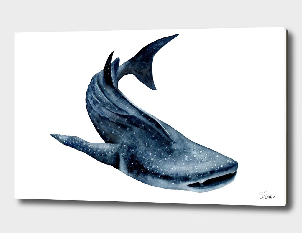 китовая акула Rhincodon typus
