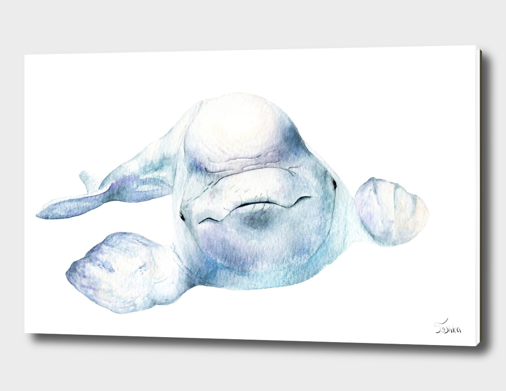 белуха Delphinapterus leucas