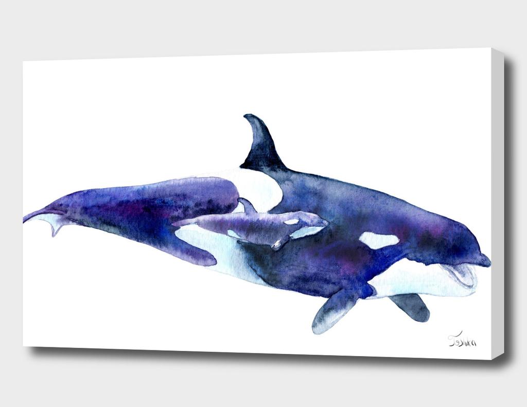 косатка Orcinus orca
