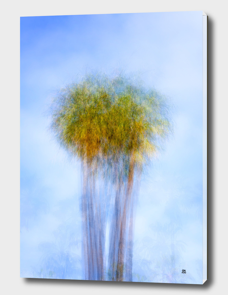 Fine Art Of The Palm Tree
