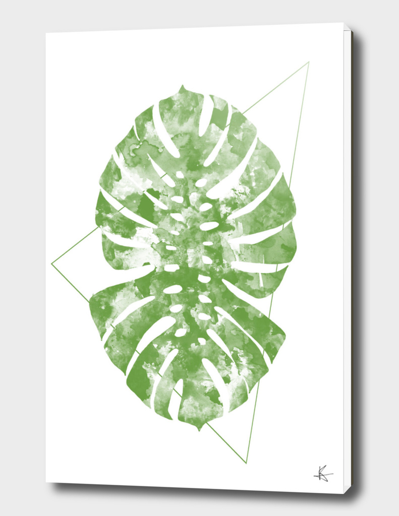 Monstera Dynamics