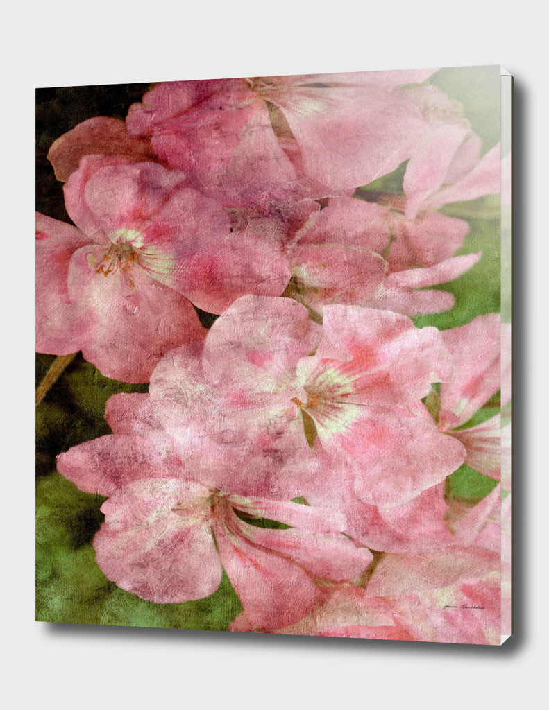 pink geranium vintage