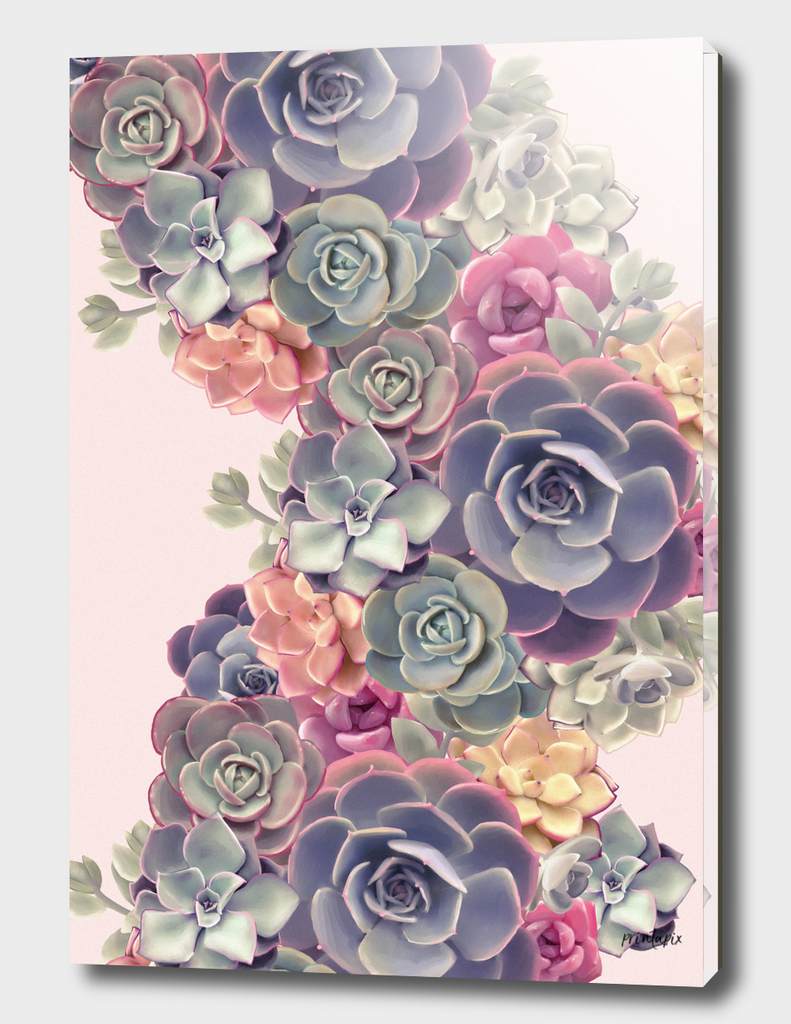 Succulents on pink