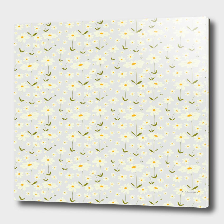 Swedish daisy