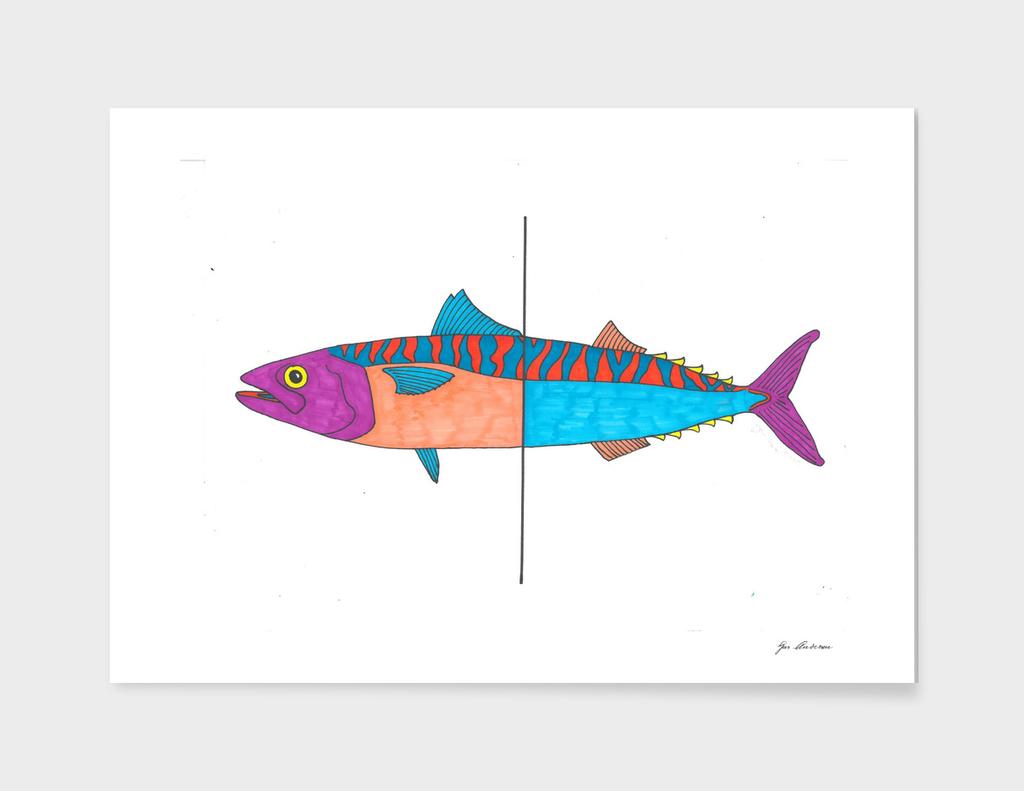 Psychedelic Mackerel fish