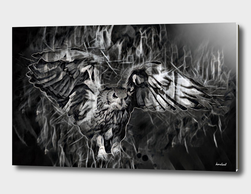Flying Owl On Gray Black Background