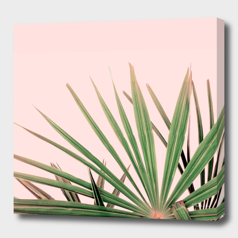 Palms blossom