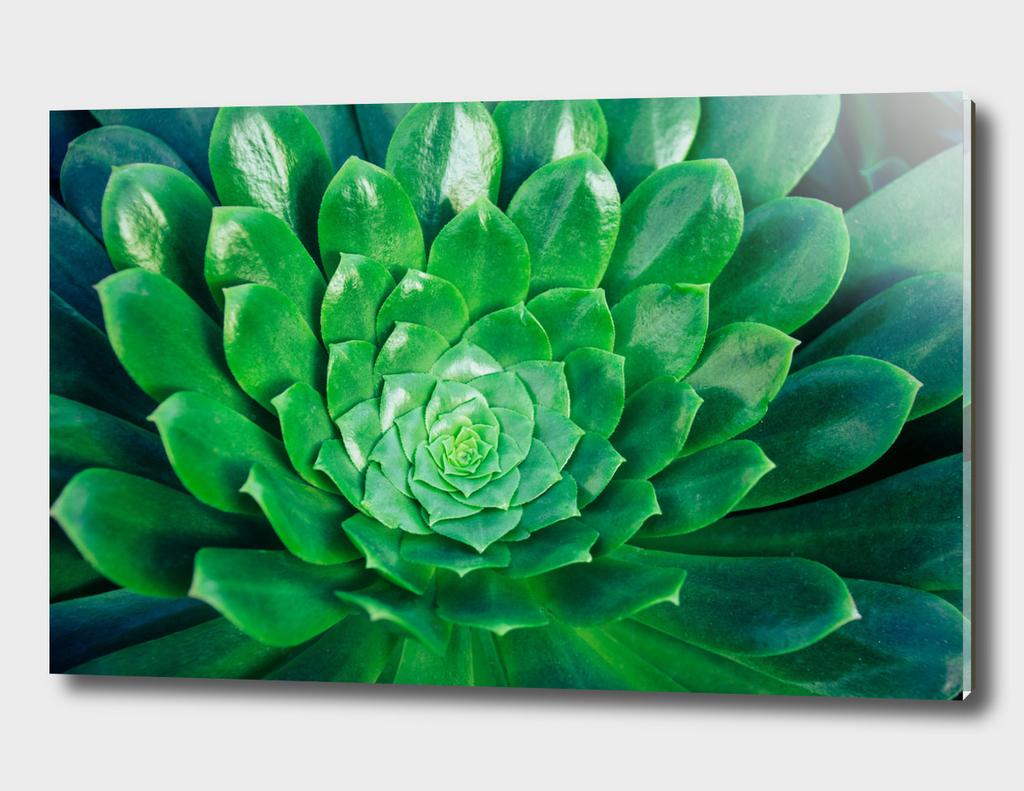 Botanical Gardens Succulent #686