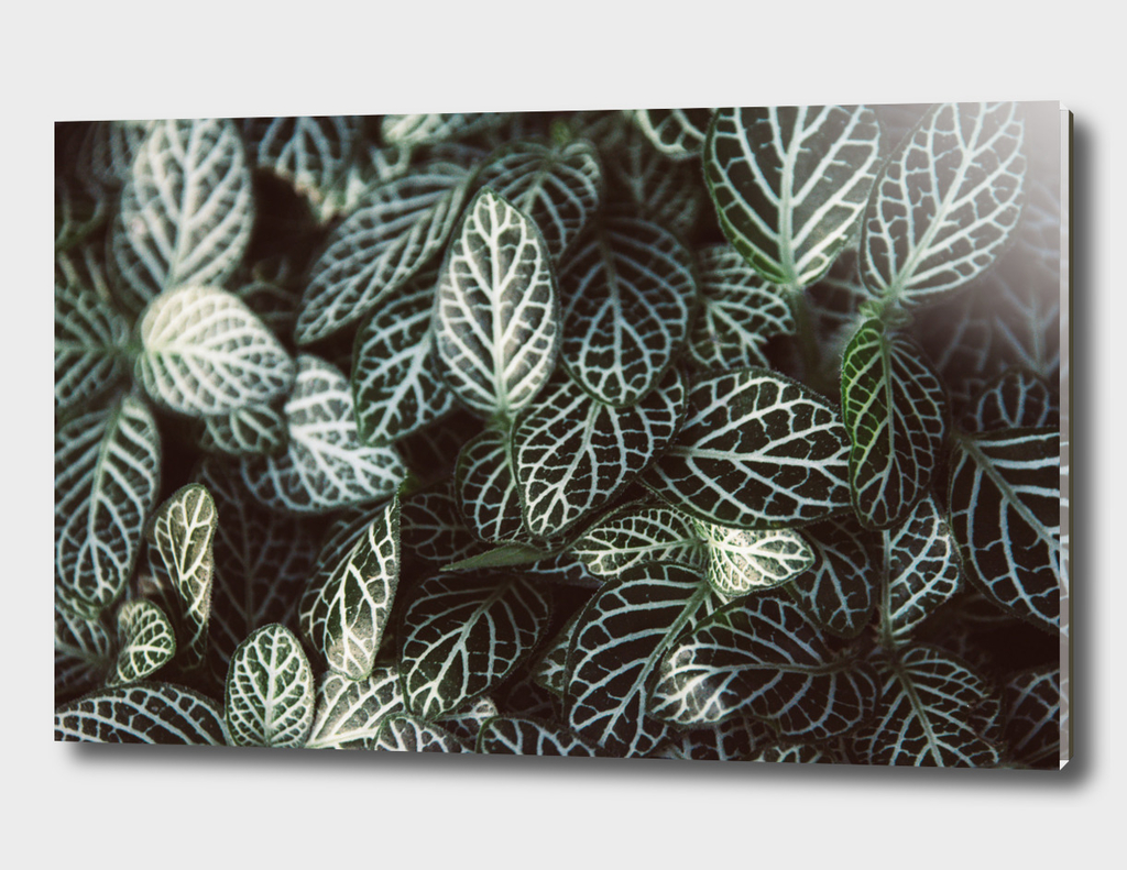 Botanical Gardens Zebra Leaf #398