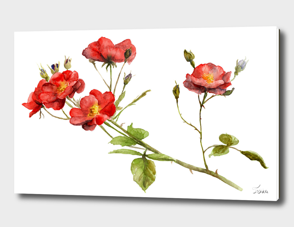 watercolor drawing of a branch of a rose