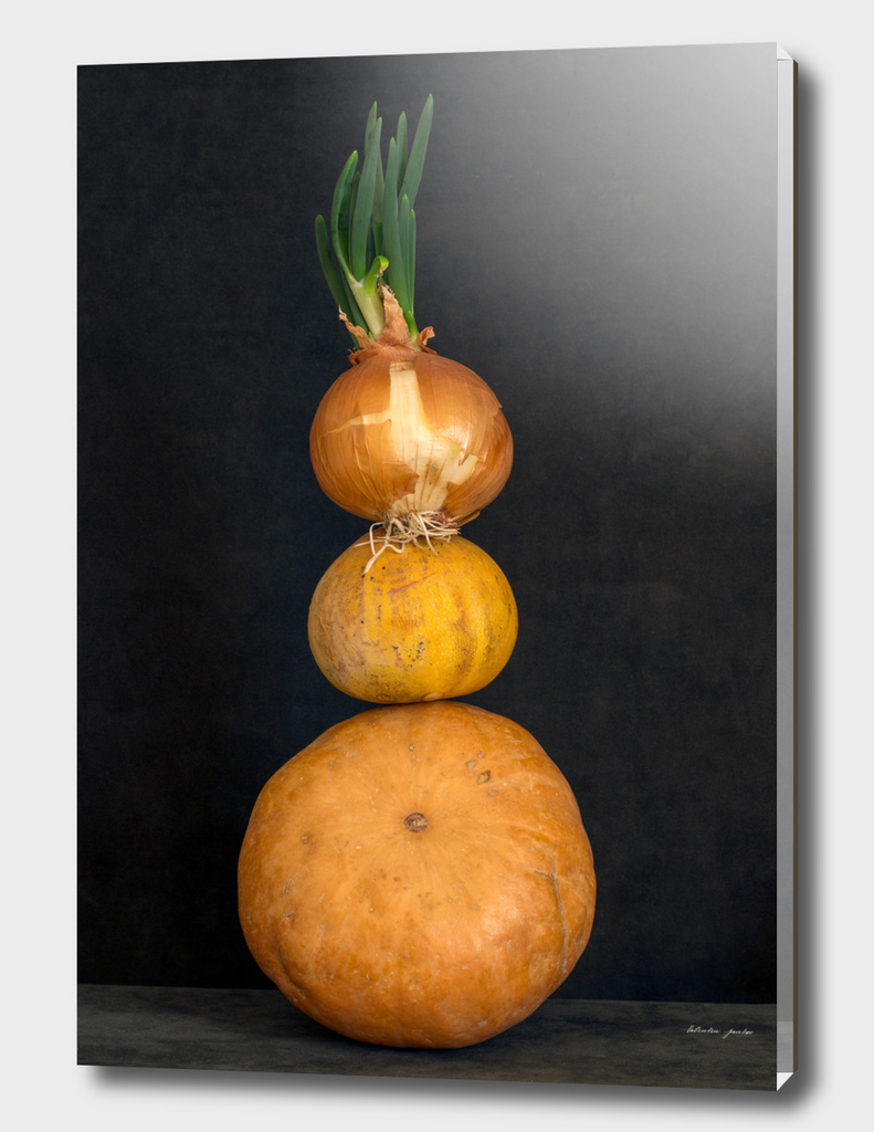 Still life with several pumpkins and sprouted onions