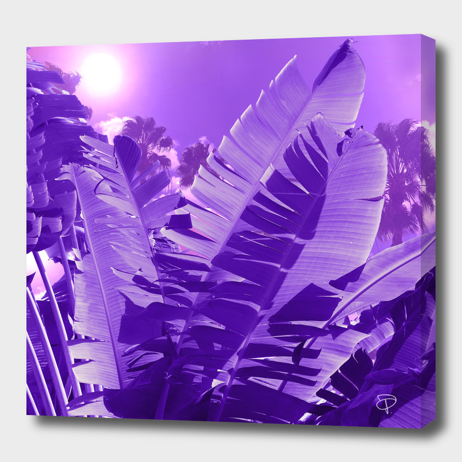 Ultra Violet Tropical Palm Beach