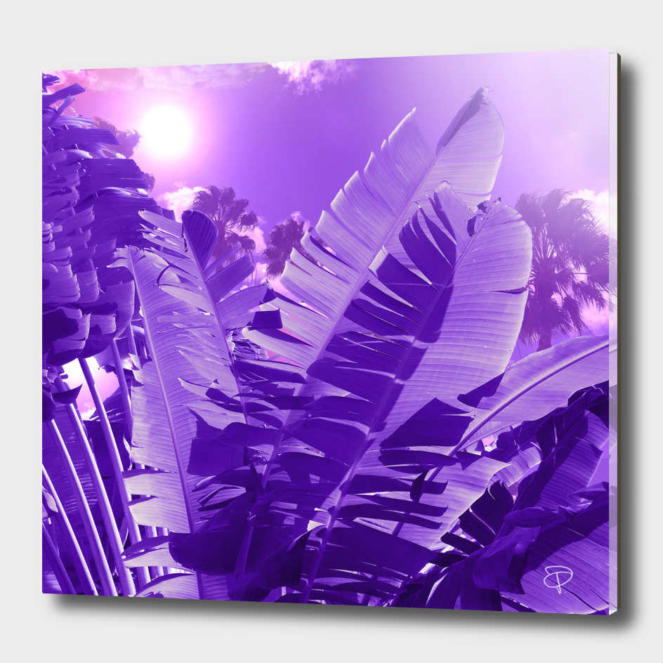 Ultra Violet Tropical Palm Beach