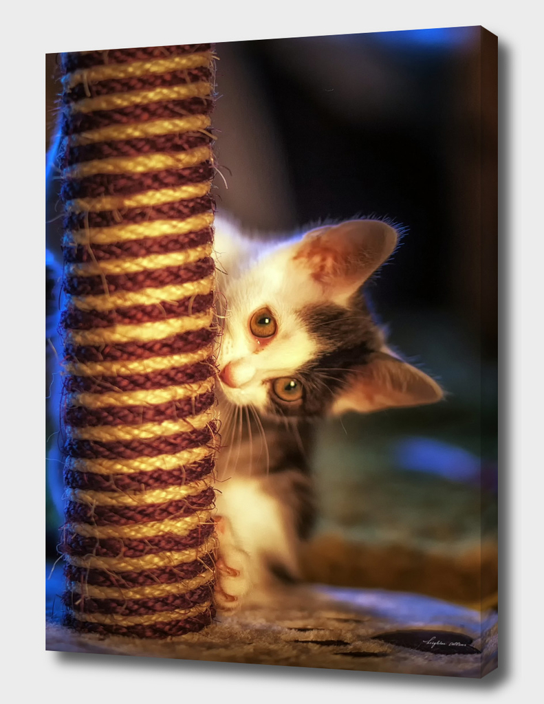 Kitten at play with scratch post