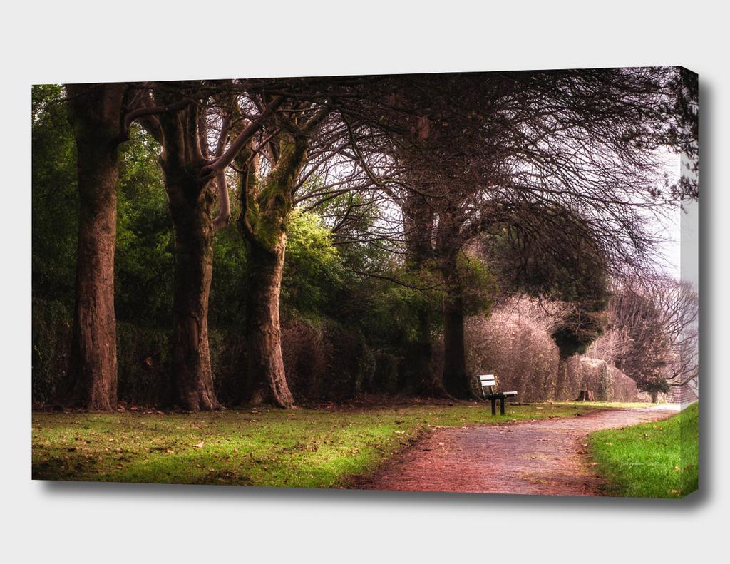Ravenhill park bench